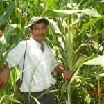 A farmer and his maize crop