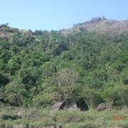 A surviving patch of rainforest