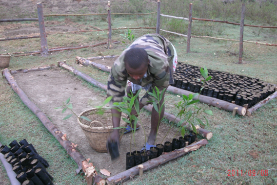 The Start Of Project S Tree Nursery Ingafoundation