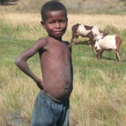 A young zebu herder