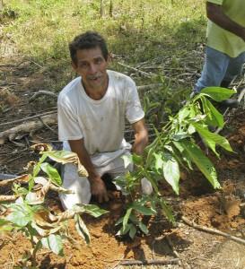 Campesino Don Alejandro sembrando las primeras arbolitos de guama en su terreno