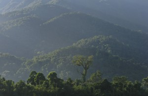El Bosque Lluvioso del Parque Nacional Pico Bonito.