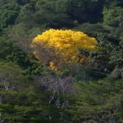 yellow tree_sitioweb
