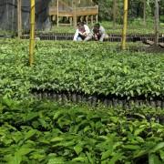Miles de arbolitos listo para la siembra en nuestro vivero.
