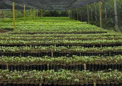 Thouands of seedlings in our new tree nursery