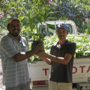 Distributing rainforest seedlings for reforestation