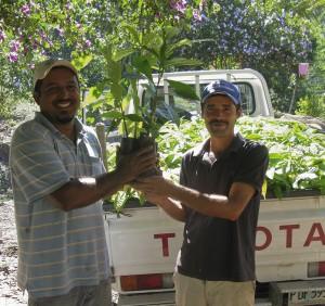Distributing rainforest seedlings for reforestation