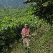 Local Farmer Don Santiago with his developing Inga alleys